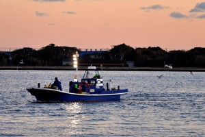 シラスウナギ漁